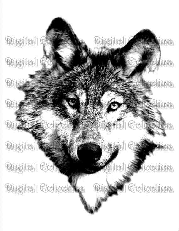 Wolf Face Wolf Png Animal Png Wolf Prints Wolf Images Etsy Wolf Face Wolf Images Wolf Poses