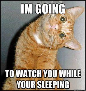 Funny Cat Memes Creepy Cat Meme Quickmeme Cat Quotes Funny