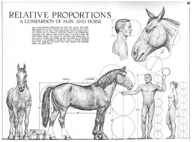 Pin by Michael Price on LineWerk | Pinterest | Horse, Anatomy and ...