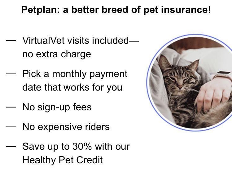 Pin On Dog Insurance