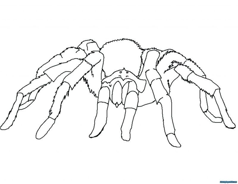 Coloring Pages Amazing Spider Man Spiders Are A Type Of Animal