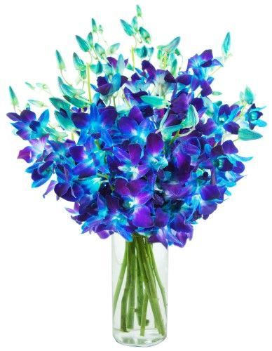 Sapphire Blue Dendrobium Orchids 20 Stems The Kabloom Collection