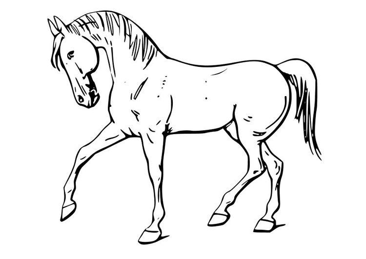 Malvorlage Pferd | coloring 6 | Pinterest | Malvorlagen pferde ...