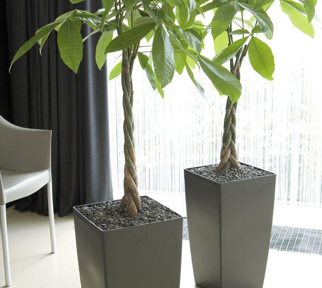 Jak Dbac O Rosliny Zima Plantas Flores