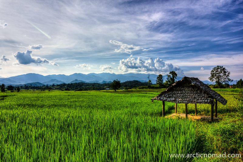 Thailand Rice Fields | Someday... | Thailand, Rice, Places