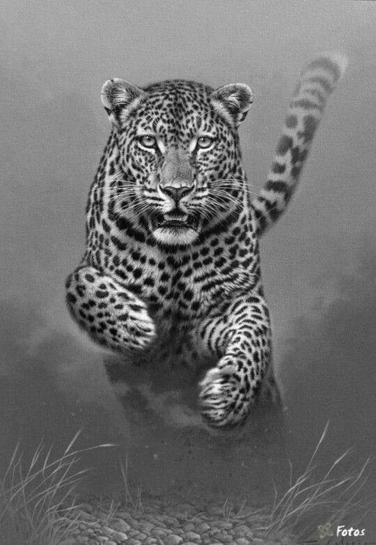 Leopard Cat Coloring Pages Colouring Adult Detailed Advanced Printable Kleuren Voor Volwassenen