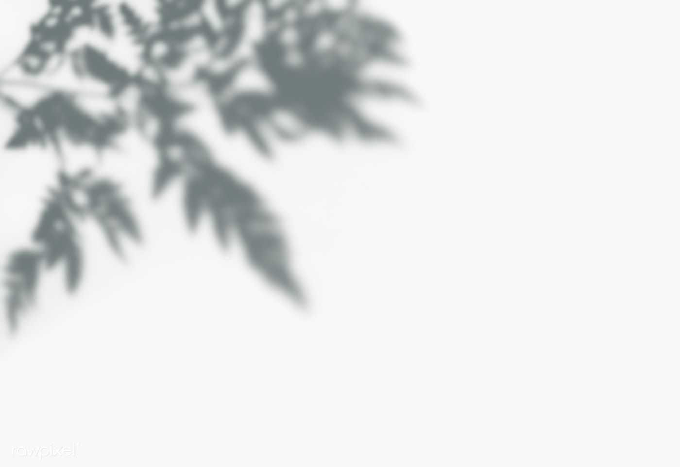 Shadow Of Leaves On A Wall Free Image By Rawpixel Com Shadow Shadow Tree Stock Images Free