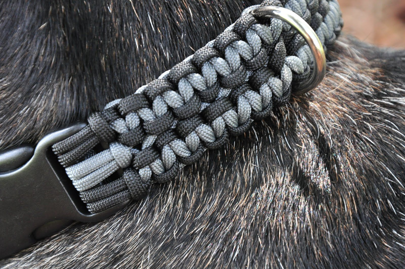 550 Paracord Dog Leash And Collars In Action Paracord Dog Leash