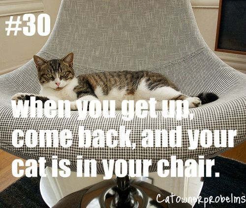 Cat Owner Problems #30. Why else would you sit down except to warm the chair for your feline overlord?