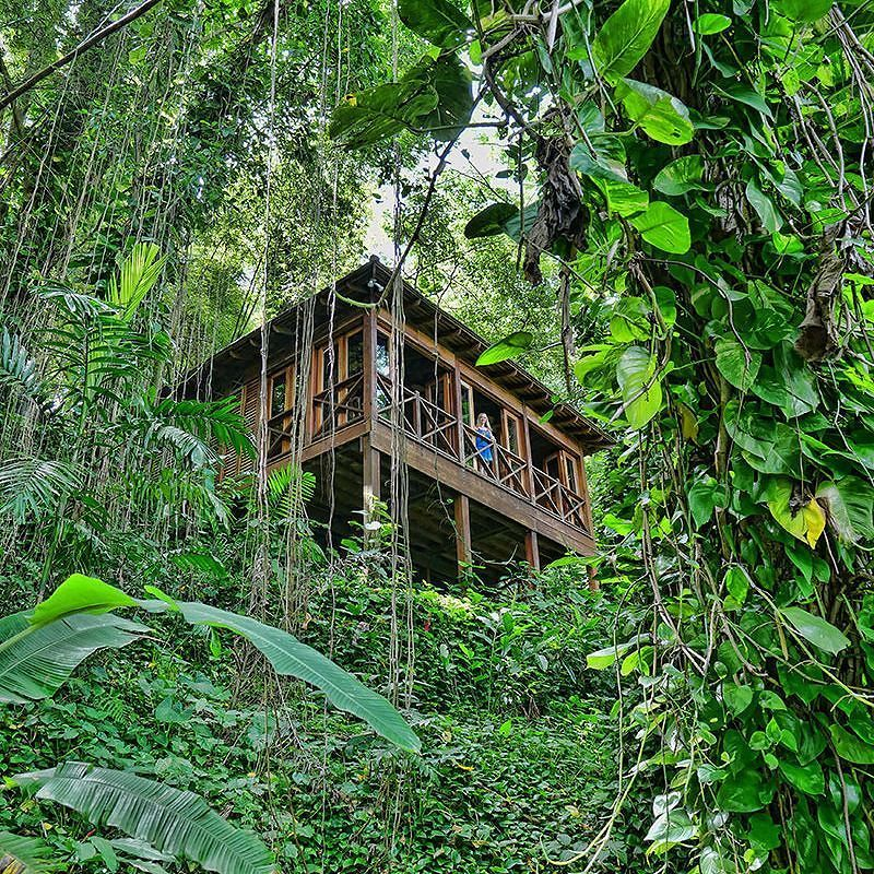 Kanopi House in Port Antonio Jamaica - loved our stay in this treehouse  sc 1 st  Pinterest & Have you ever stayed in a treehouse? As I write this Iu0027m looking ...