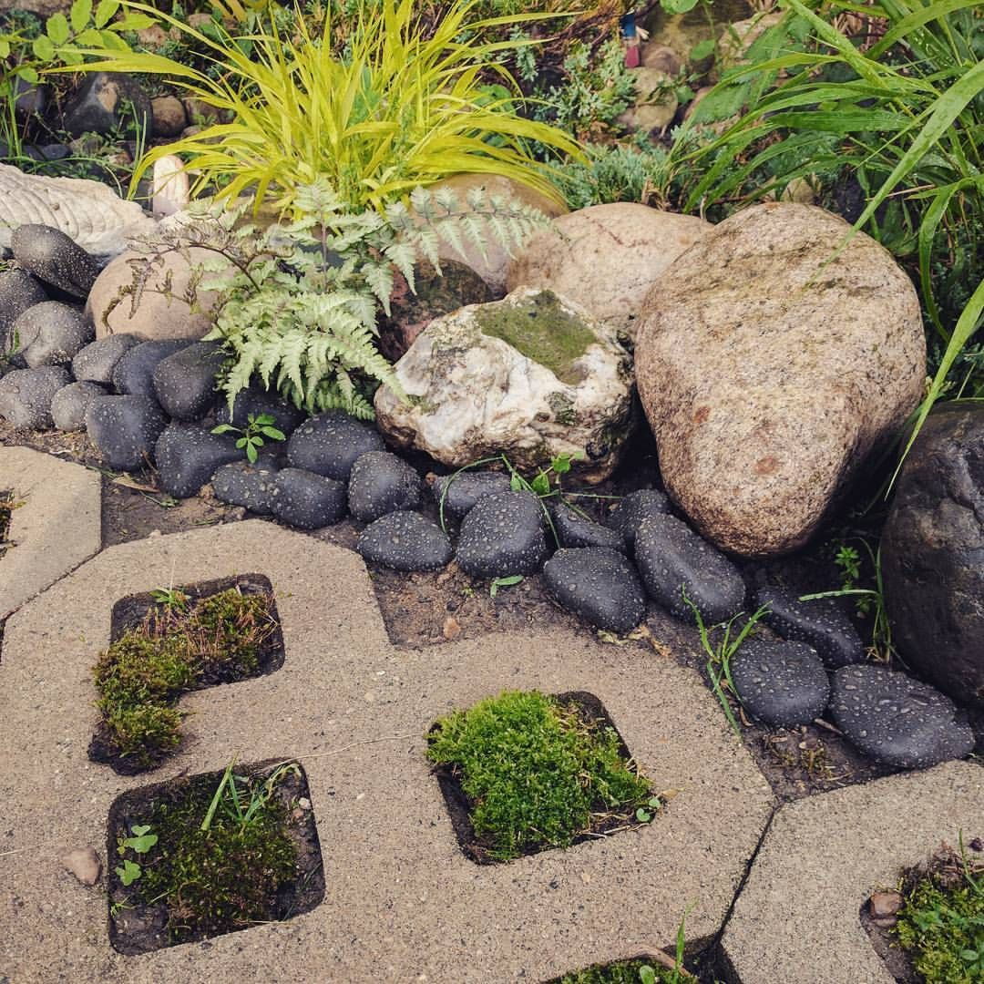 Propagating Moss So Beautiful And Soft Japanesegarden Moss
