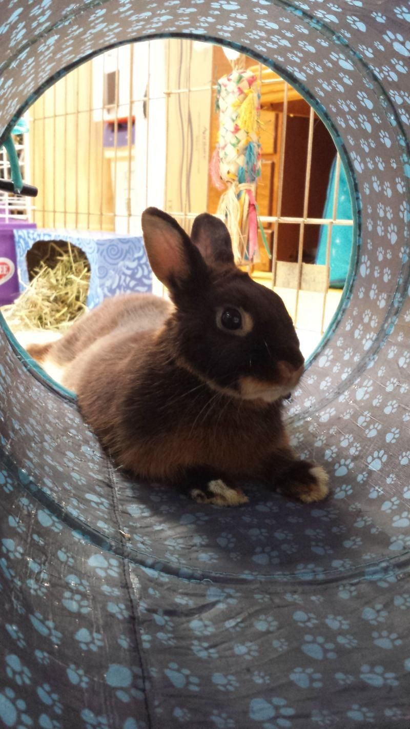 Adopt Lucy on Petfinder Pets, Pet adoption, Animals
