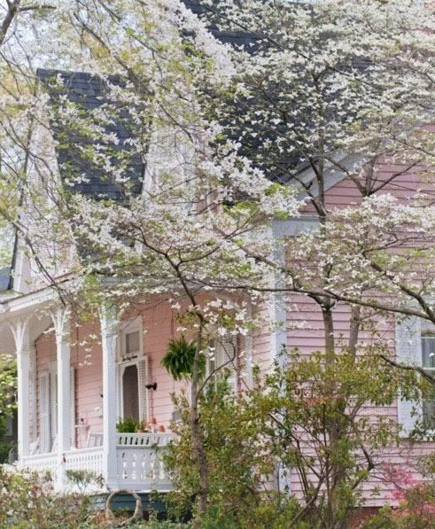 Pink Victorian house facade looks even lovelier  with the Dogwood tree in bloom.