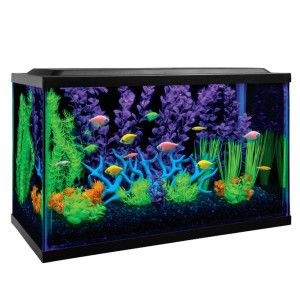 Glofish 10 Gallon Aquarium Kit Glofish Glofish Aquarium Glow Fish