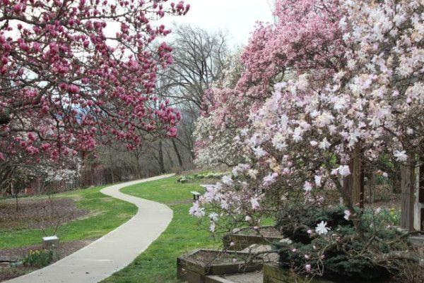Spring Blossoms At Eden Park 365 Cincinnati Eden Park Cincinnati Parks Park