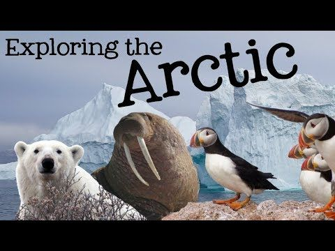 Photo of 7 Classroom Friendly Videos for Studying the Arctic