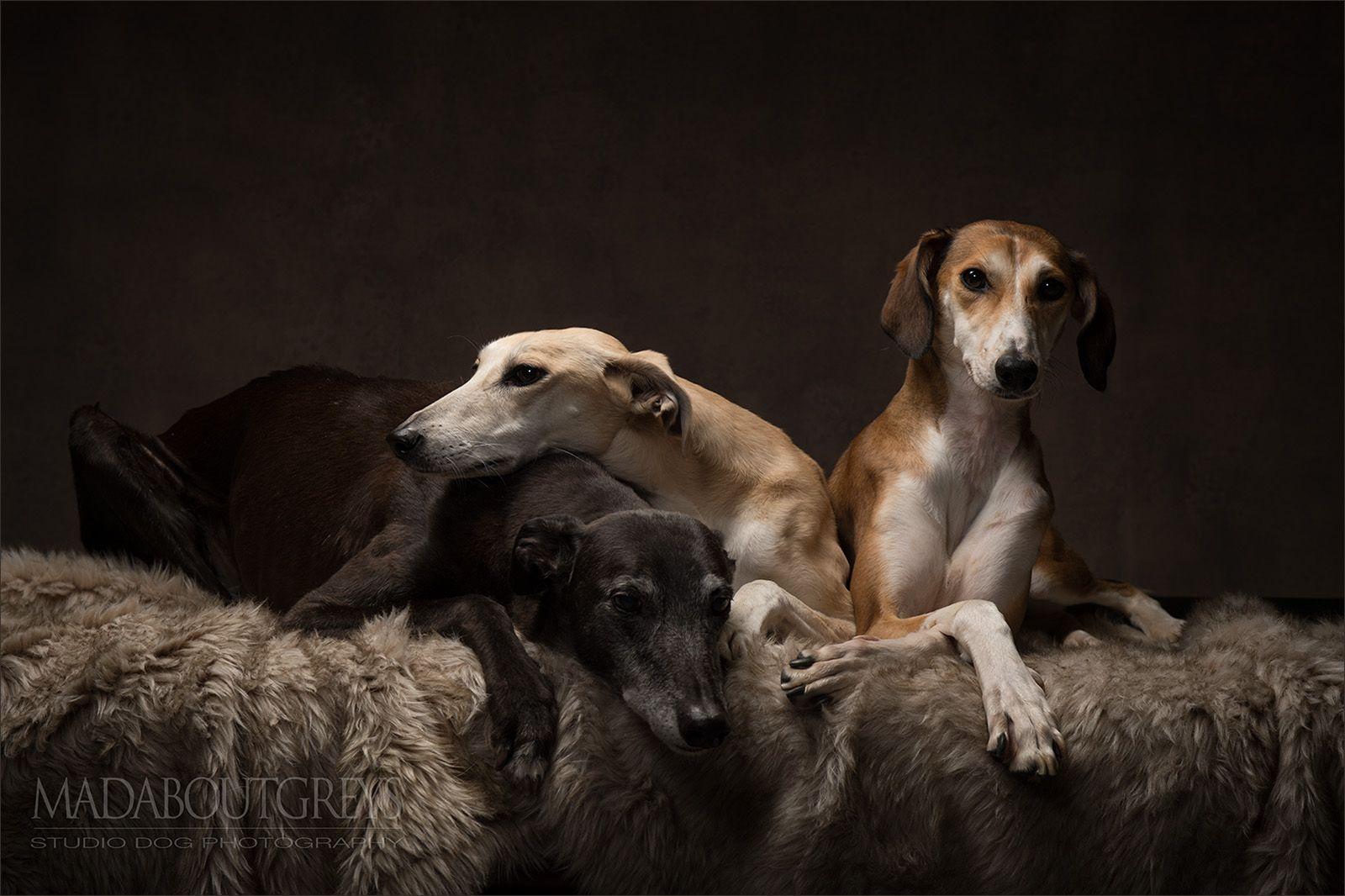 World Galgo Day 2017 Greyhound Dog Photograph Hound