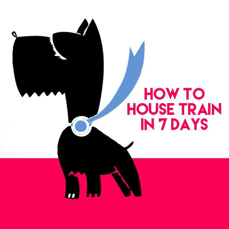 How To Potty Train Your Dog In 7 Days Or Less Training Your Dog