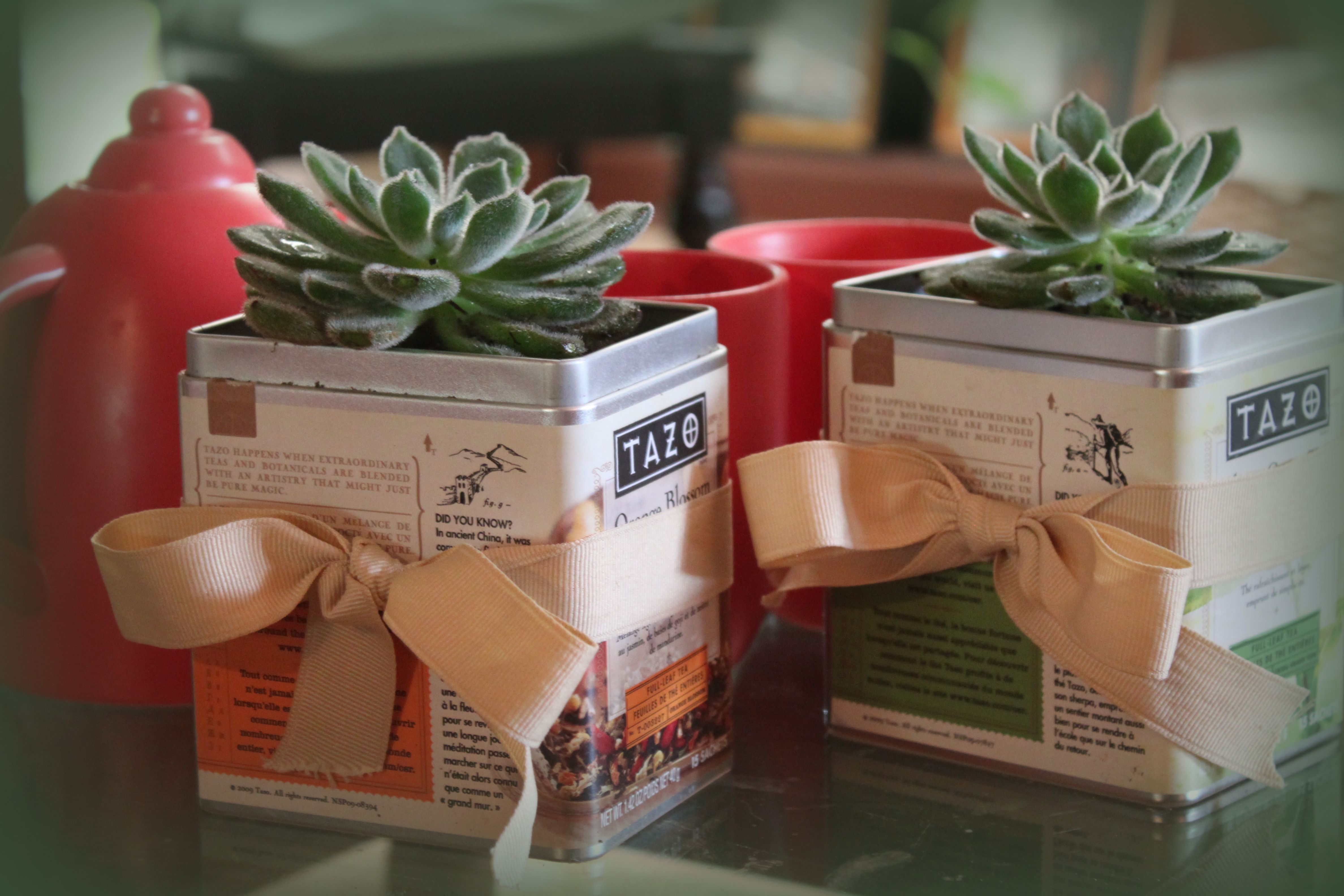 Plant little indoor plants in tea tins....