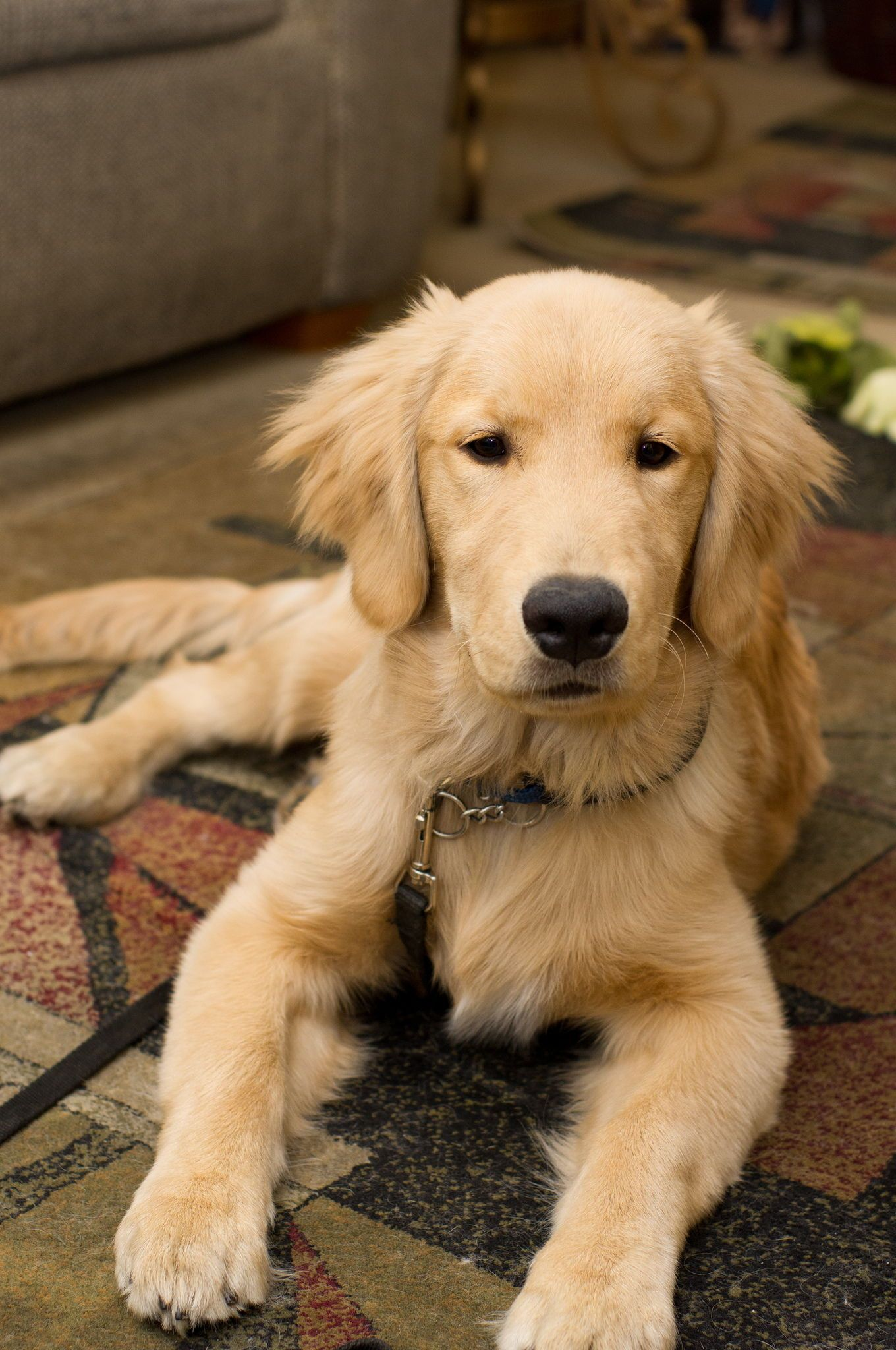 How To Stop Your Dog From Destroying Your Home Dog Training