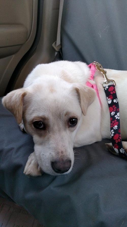 Adopt Frannie On Cute Beagles Puppies Beagle Puppy