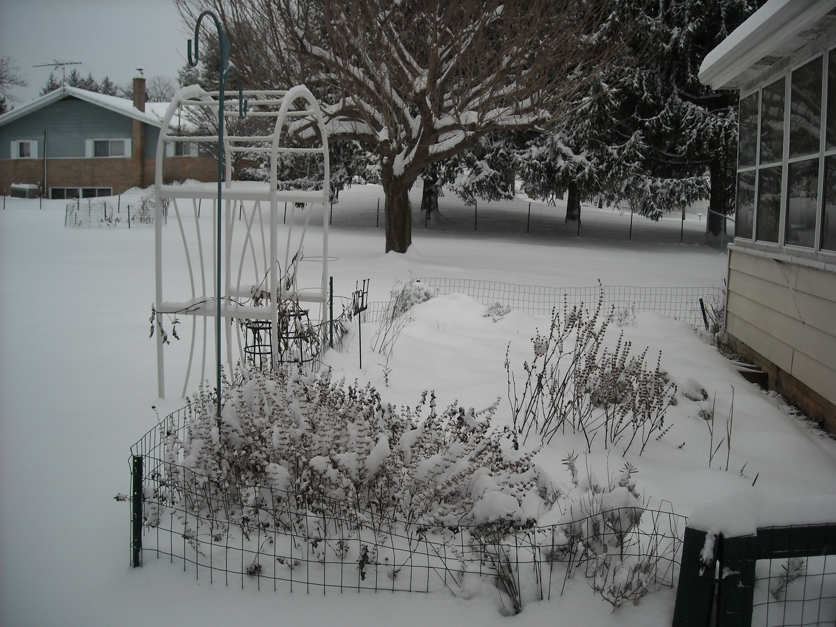my herb garden snow fall 12 08 2013 winter in manchester