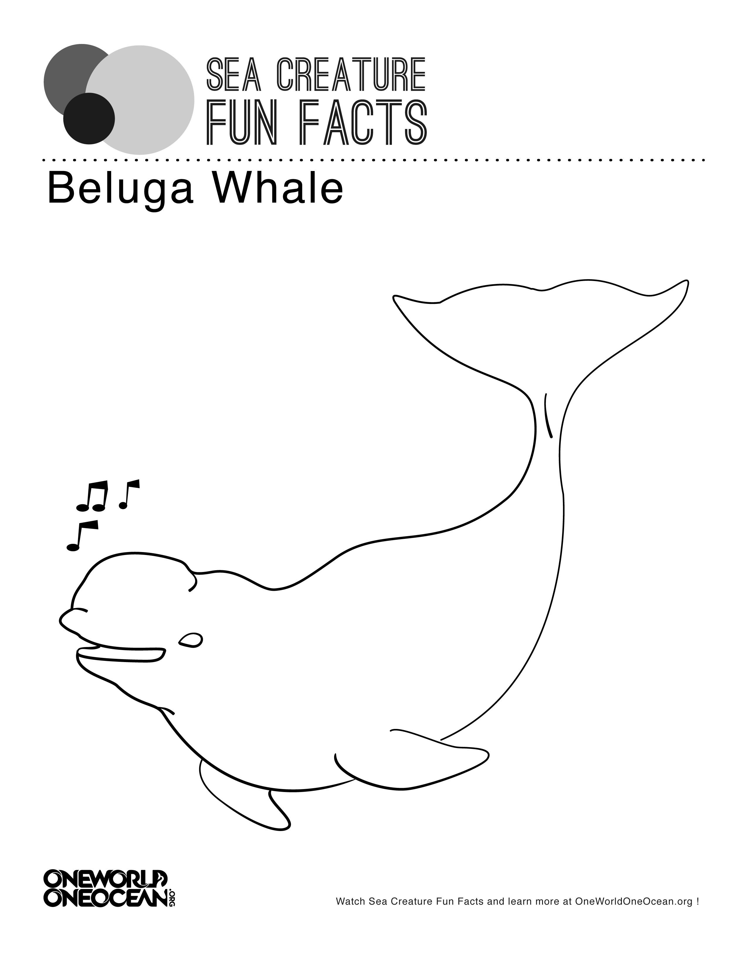 Beluga Line Drawing Whale Coloring Pages Beluga Whale Whale