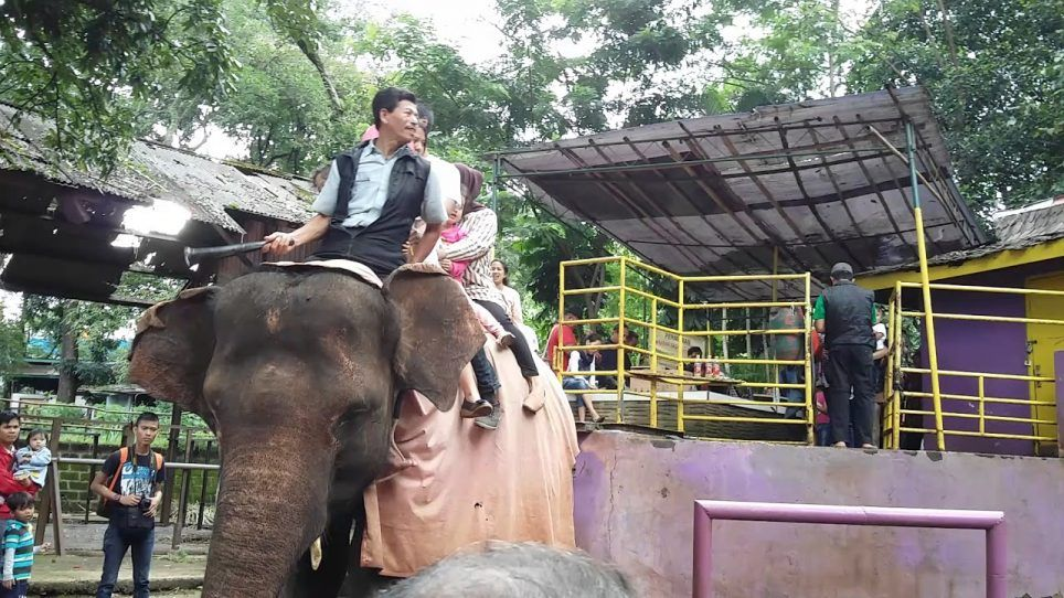 Harga Tiket Kebun Binatang Bandung Hari Ini