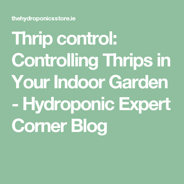 Thrip control: Controlling Thrips in Your Indoor Garden - Hydroponic