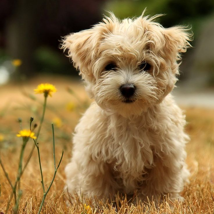 Cute Puppy Backgrounds DOWNLOAD WALLPAPER ADD TEXT ADD TO