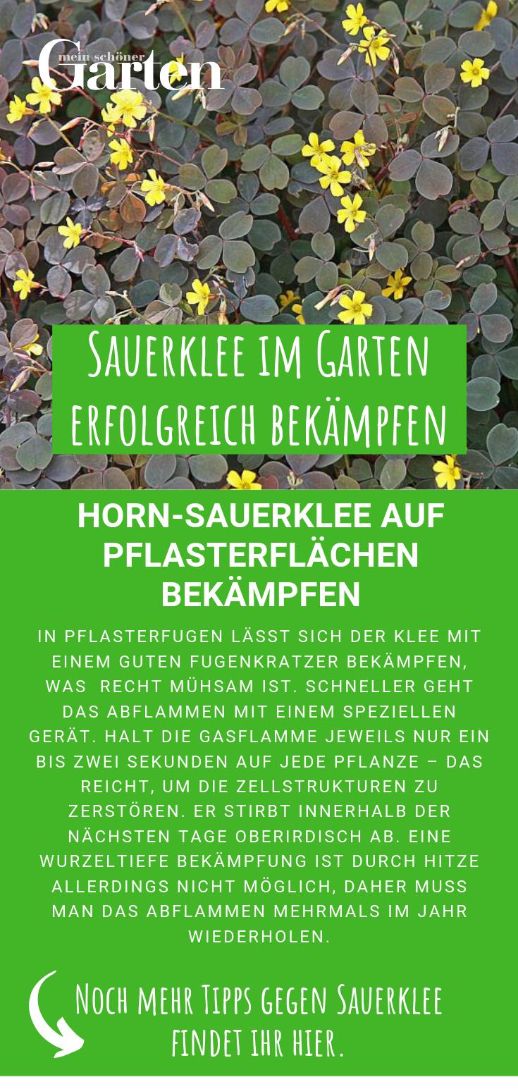 Sauerklee Im Garten Erfolgreich Bekampfen Unkraut Im Garten Garten Ziergarten