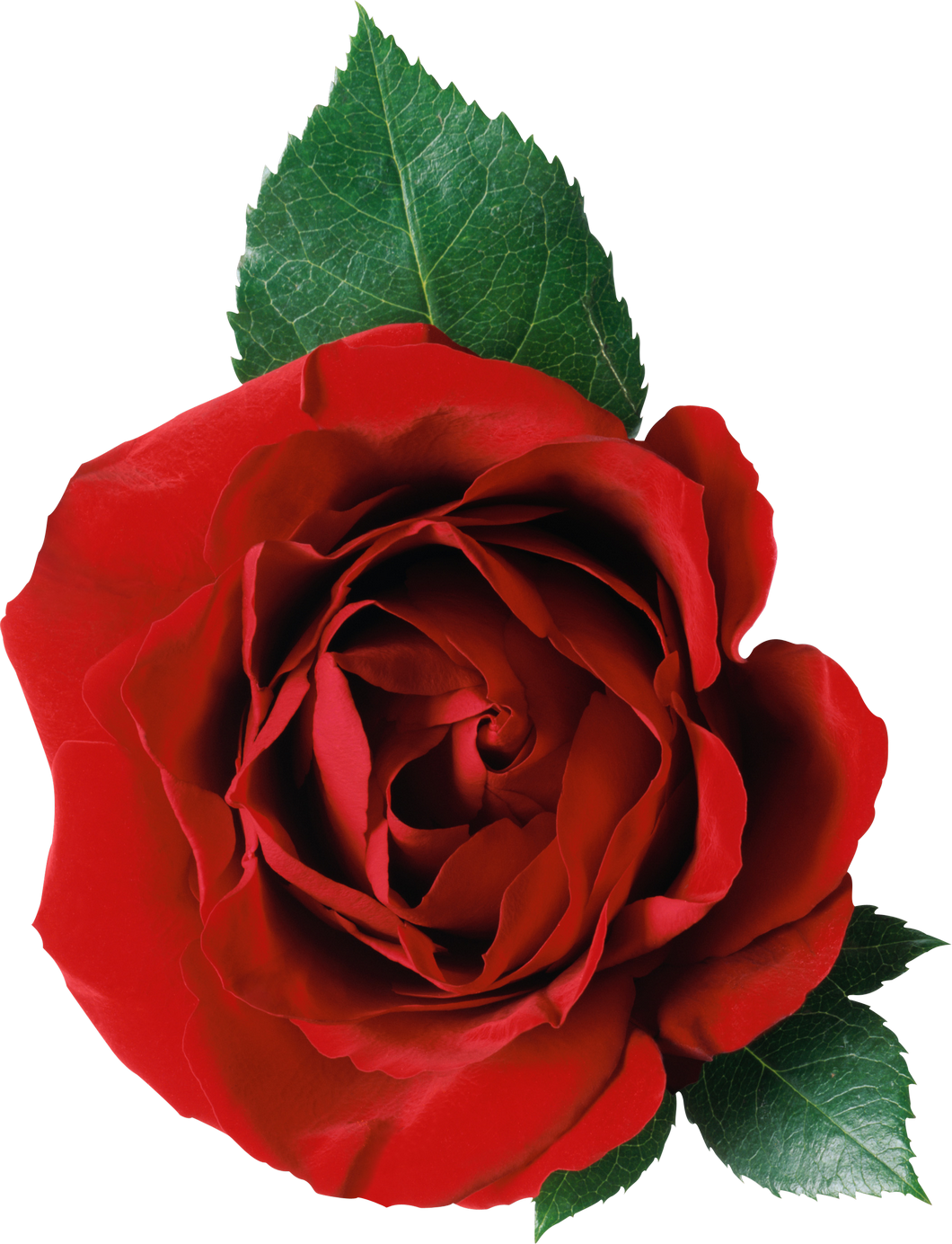 Red Rose Red Rose Png Red Roses Flowers