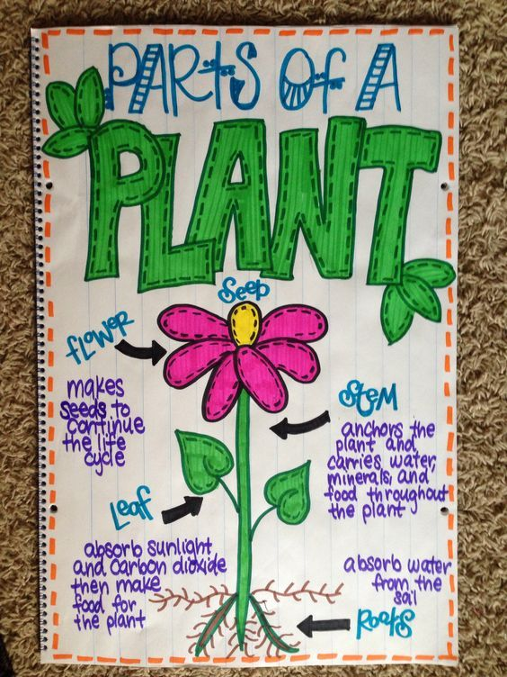 Parts of a plant anchor chart | Science anchor charts