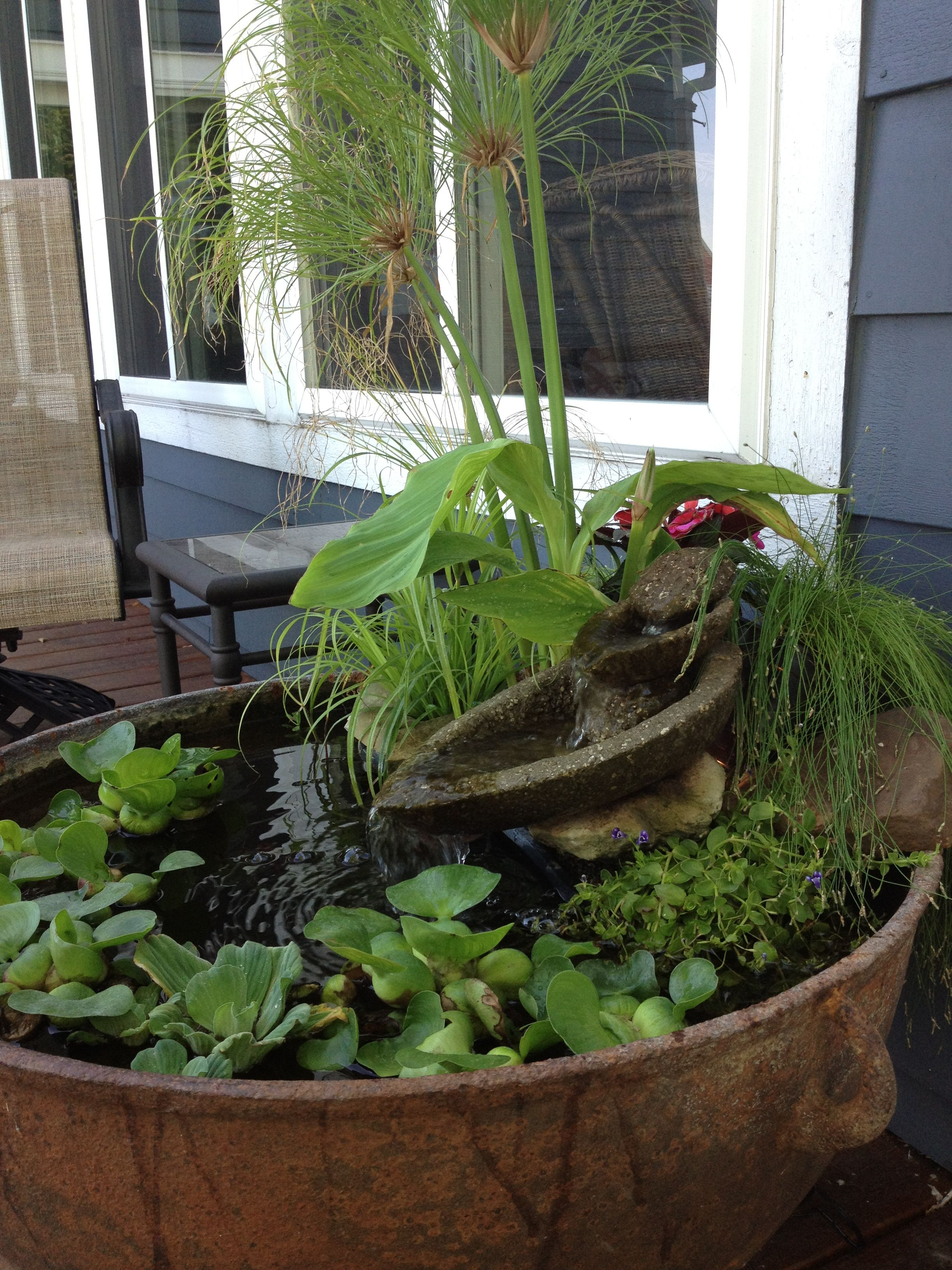 Container water garden garden stuff i have to do for Container pond
