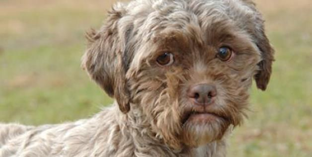 Photo Of A Dog With Human Esque Features Via Petfinder Http Aka Ms Dog Human Dog Face Human Face Dogs