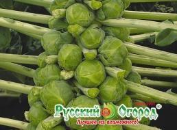 BẮP CẢI MINI BRUSSELS  Brussels sprouts có vị ngọt tự nhiên. Chứa một hợp chất đặc biệt - iso cyanate axit propionic, chẳng hạn như chất béo. Theo nghiên cứu mới nhất cho thấy bắp cải tí hon chứa selenium, tiêu thụ thường xuyên của các tác dụng chống ung thư.