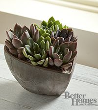 The FTD® Love Grows Heart by Better Homes and Gardens®