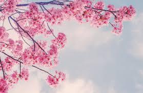 Cherry Blossom Branch Wallpaper Mural Hovia In 2021 Cherry Blossom Wallpaper Cherry Blossom Wallpaper Iphone Cherry Blossom Branch