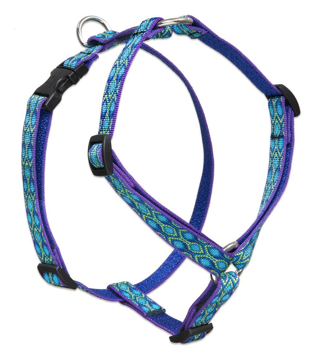 Lupine 3/4 Inch Rain Song Roman Dog Harness >>> Unbelievable dog item right here! : Dog stuff