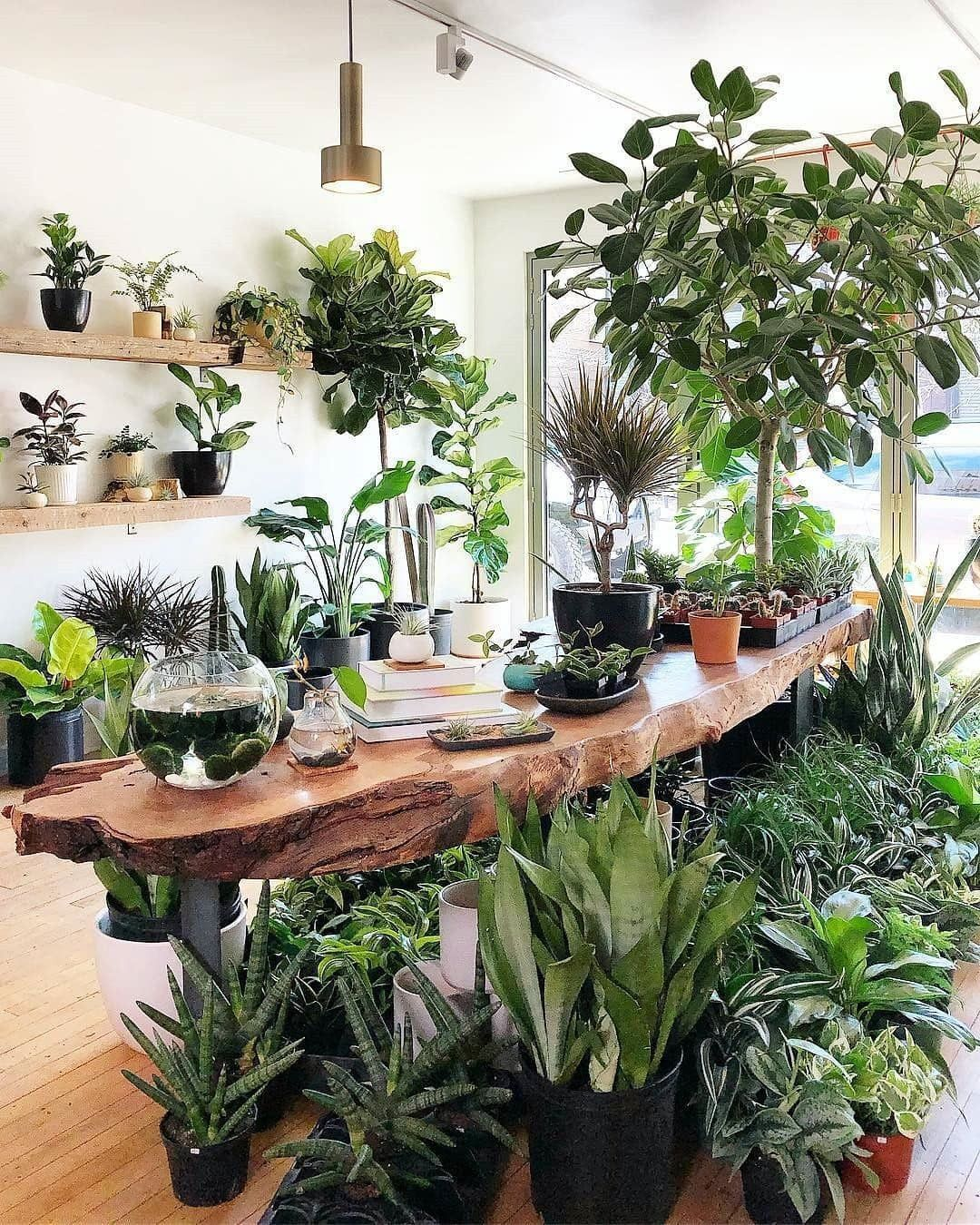45 Beautiful Indoor Plant Ideas Plant Decor Indoor Plant Decor Indoor Plant Shelves