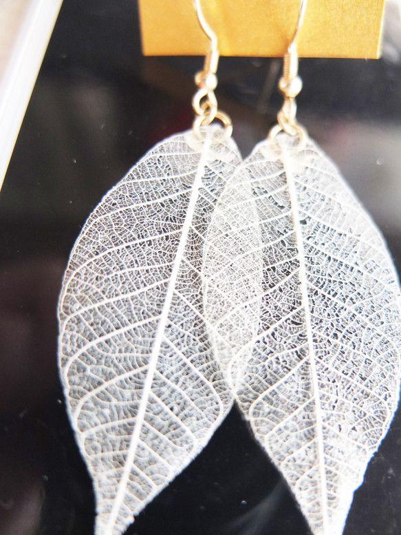 本物の葉っぱを樹脂でぷっくりつやつやにコーティングしました。ピアスは無料でイヤリングに変更できます。葉っぱの大きさ 約2.3cm×5.5cm天然の...|ハンドメイド、手作り、手仕事品の通販・販売・購入ならCreema。