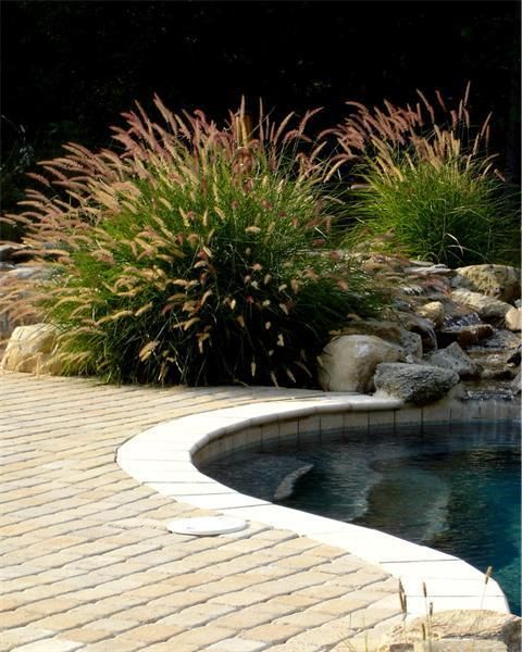 Swimming Pool Plants: Oriental Fountain Grass In Planter At Pool Edge. Pavers