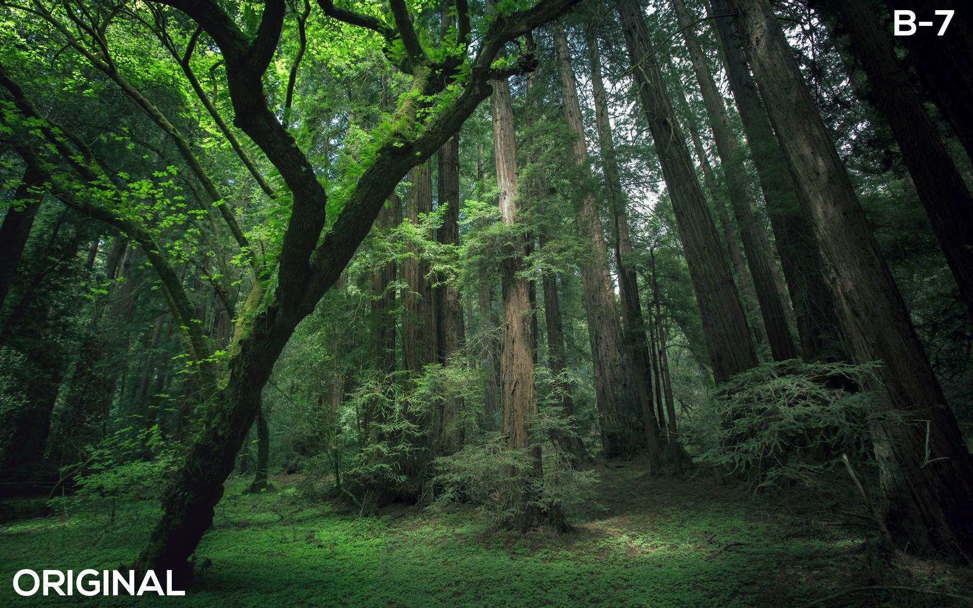Ultimate Lut Pack For Creators Forest Photos Forest Wallpaper Beautiful Forest