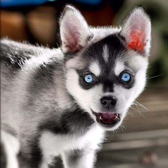His Eyes Were Really Blue As A Pup Klee Kooperative
