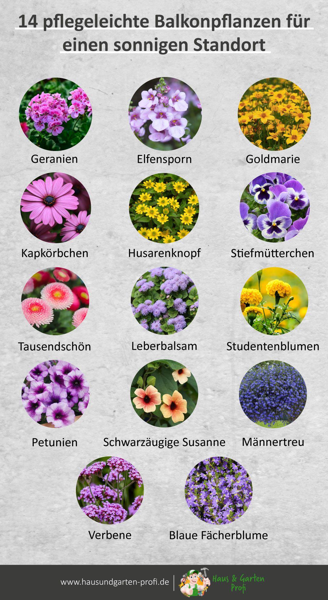 14 Pflegeleichte Balkonpflanzen Fur Einen Sonnigen Standort Balkon Pflanzen Pflegeleicht Balkon Pflanzen Garten Bepflanzen