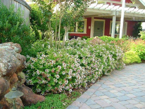 5 Nice Shrubs For Summer Blooms Florida Landscaping Garden