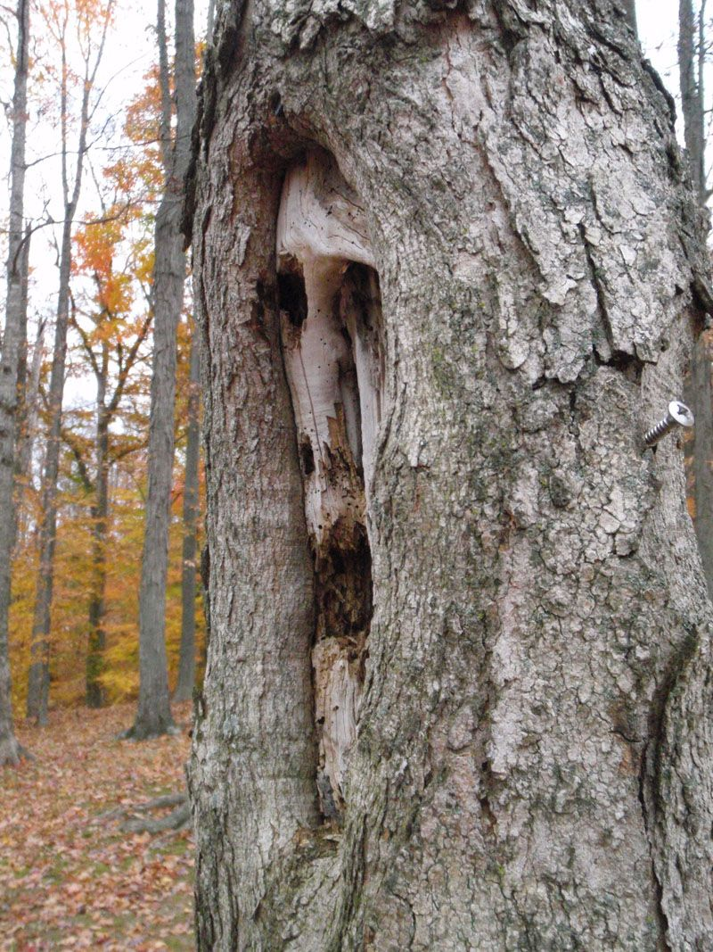 Sous les arbres-gardiens... 94ebe906778b3d31aac4c873e2568fad