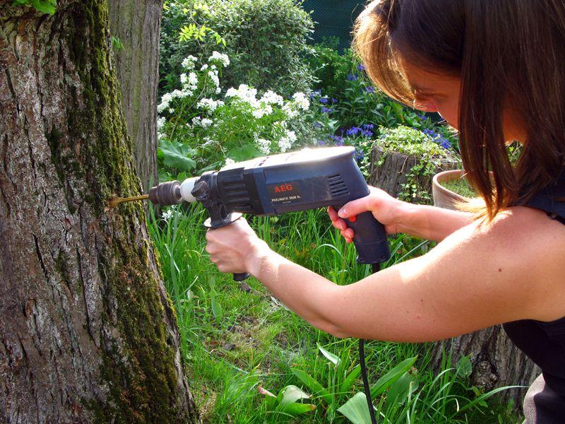 La Devitalisation D Une Souche D Arbre Jardins Souche Detruire Une Souche Petit Arbuste