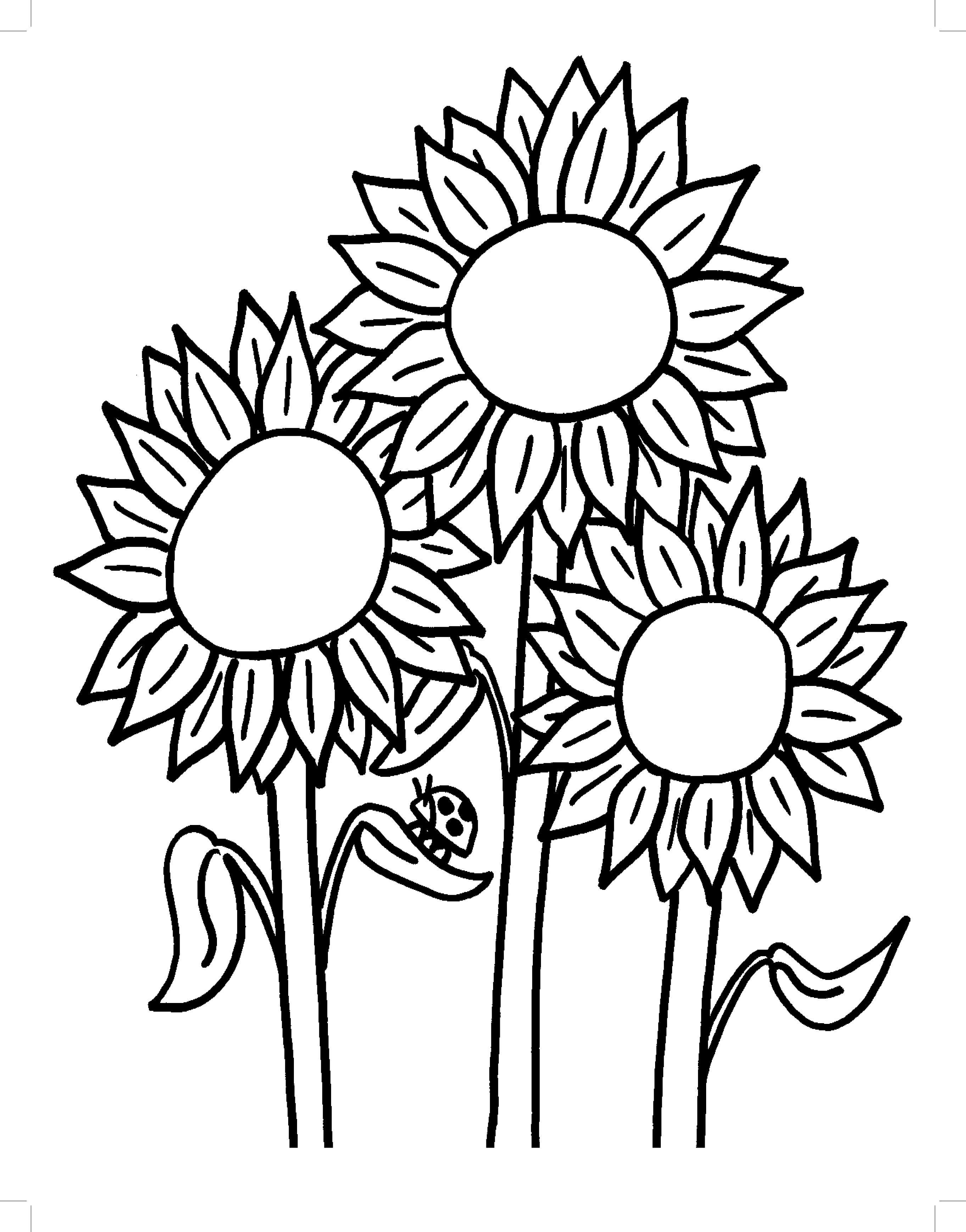 sunflower pattern printable Google Search Sunflower