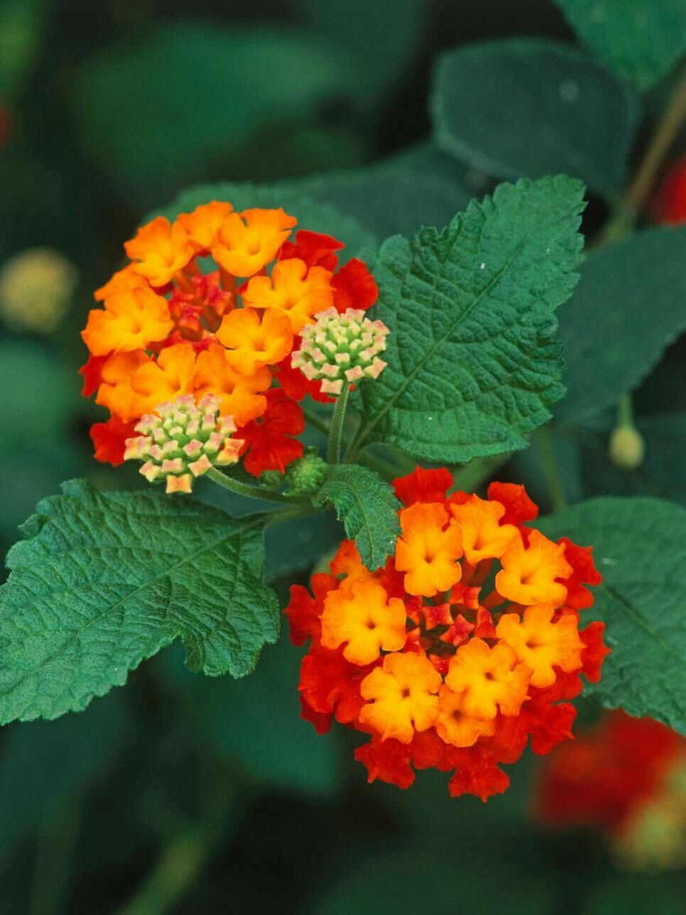 Pin De Perrinenicole Em Fleurs Plantas Jardim Plantas Pancs
